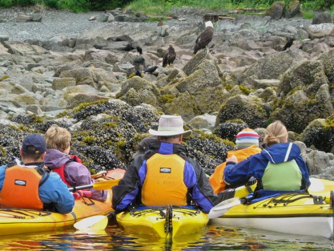 Kayaking in brown bear country