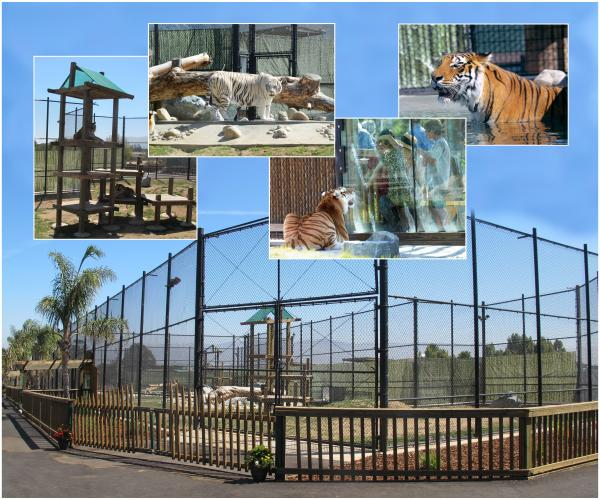 Tiger Exhibit at Monterey Zoo