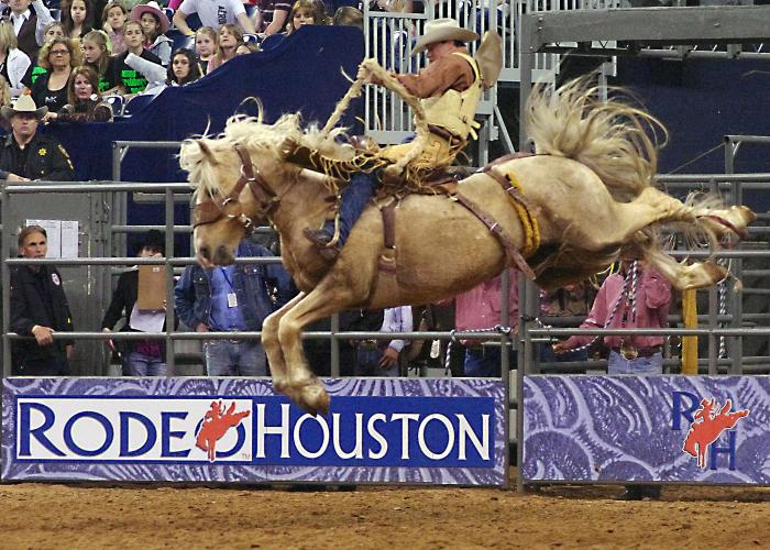 Houston Rodeo cowboy riding a bucking bronco