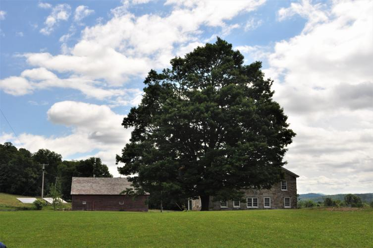 Lavenlair Farm view of large tree by house and barn
