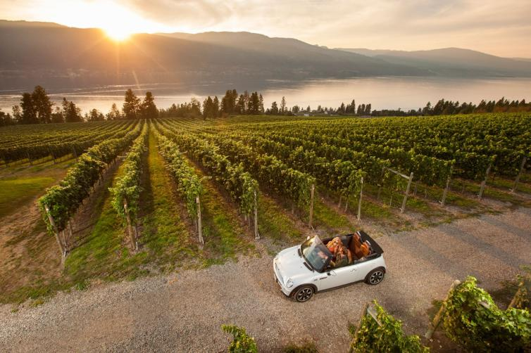 Driving in the Vineyard