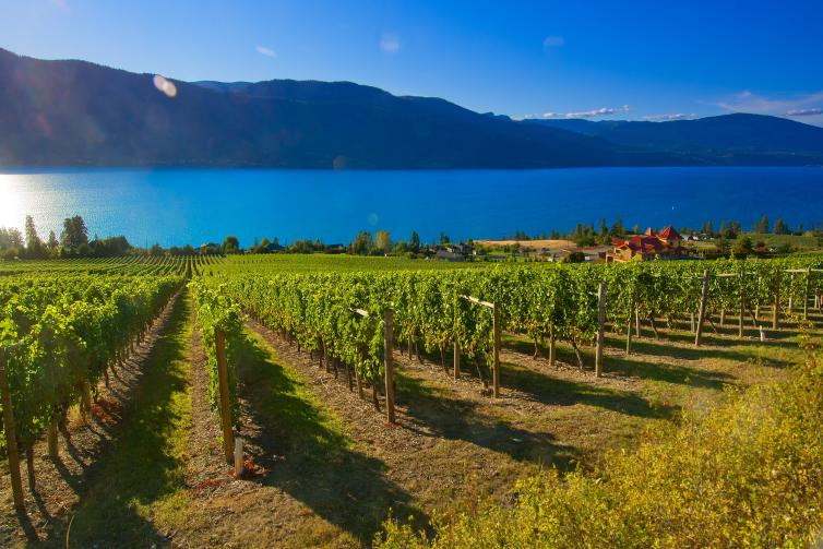 Gray Monk Winery on Lake Country's Scenic Sip Trail