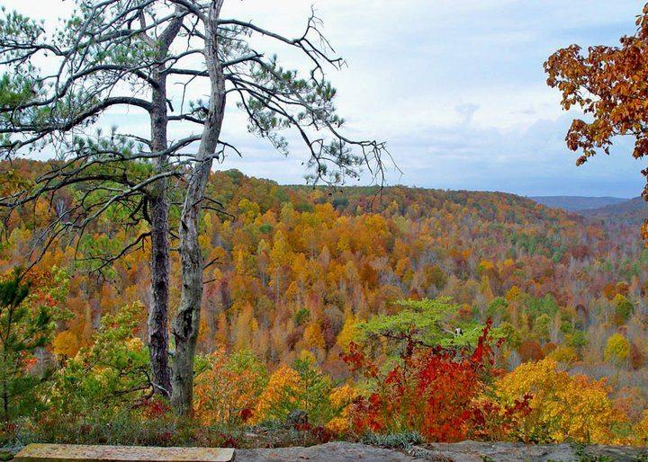 Cane Creek Canyon Leaves