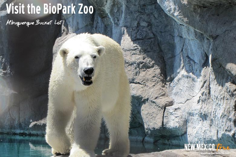 Visit the BioPark Zoo