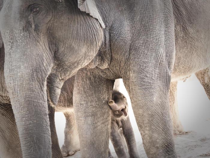 Elelphants at Houston Zoo