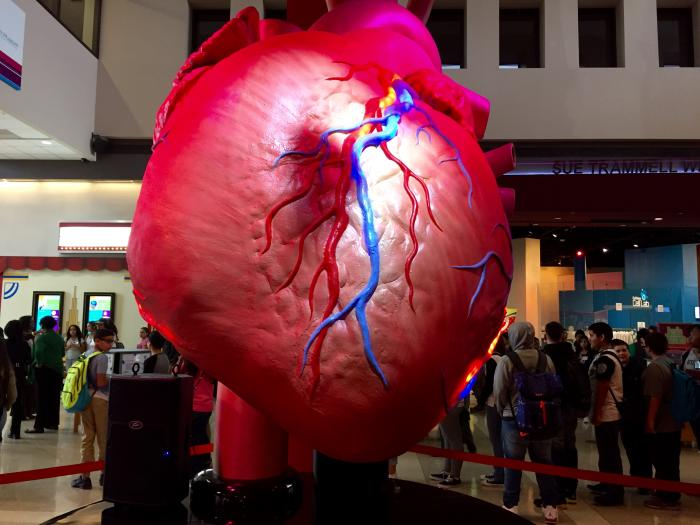 Health Museum Heart
