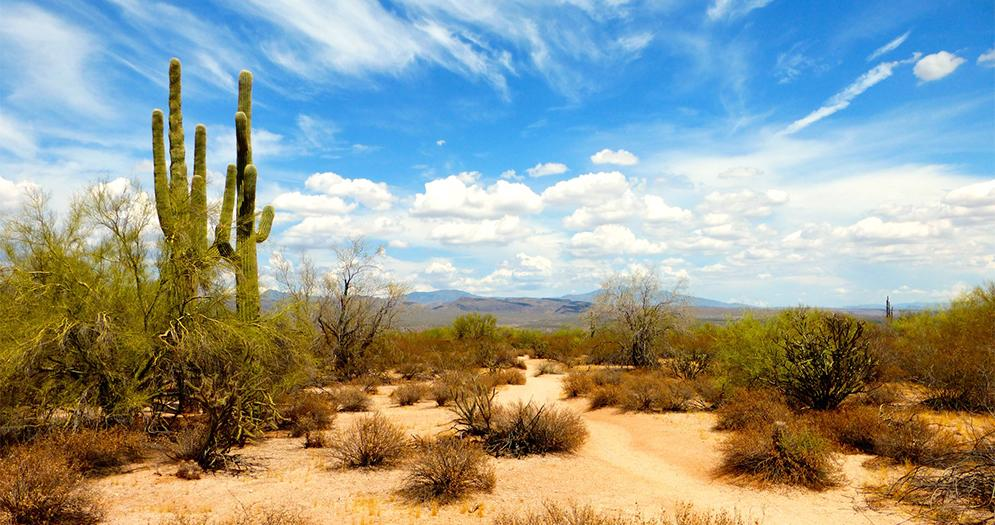Sonoran Desert Tours