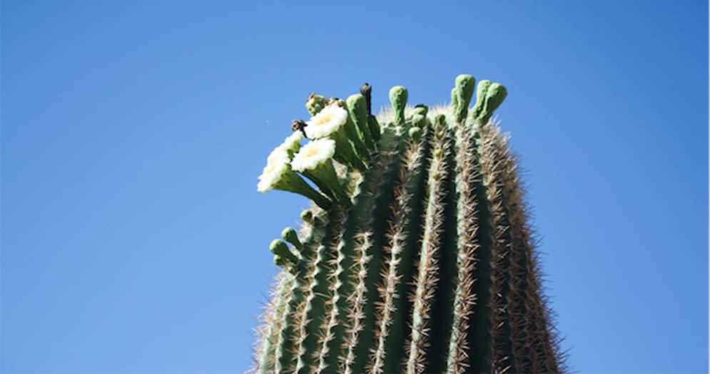 AFAR Desert