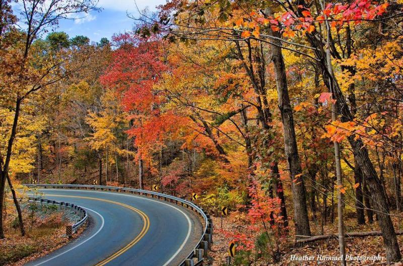 Curvy Road Fall