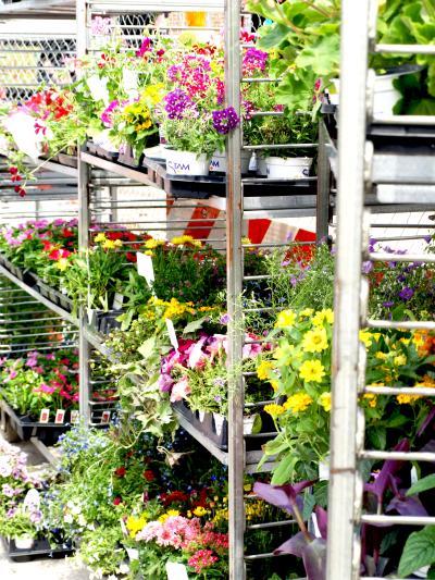 Downtown Farmers Market Flowers