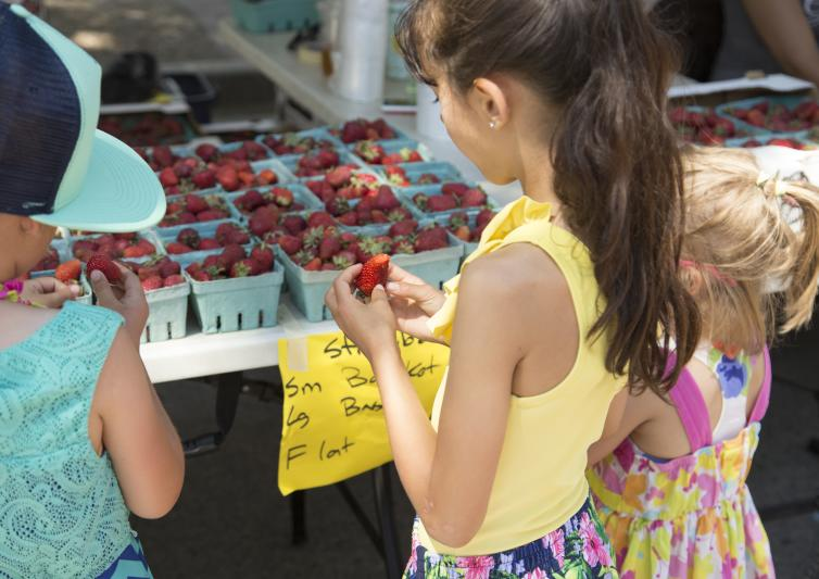 Strawberries at the Downtown Farmers Market
