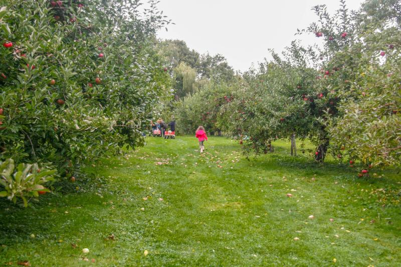 rocky brook orchard_credit Discover Newport-2