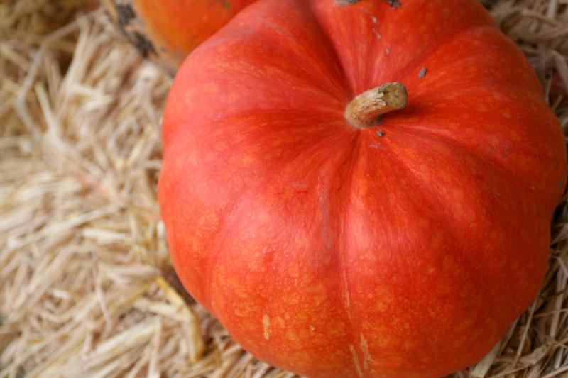 sweet-berry-farm_credit-discover-newport-2-7.jpg