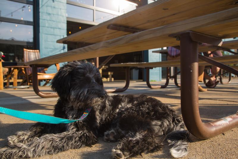 Pet-Friendly Commonwealth Brewery