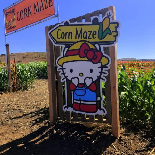 Sanrio corn maze Tanaka Farms