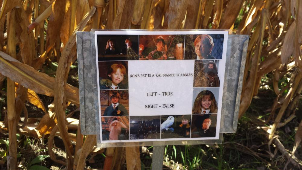 Question along the corn maze at Greendell Landscape Solutions.