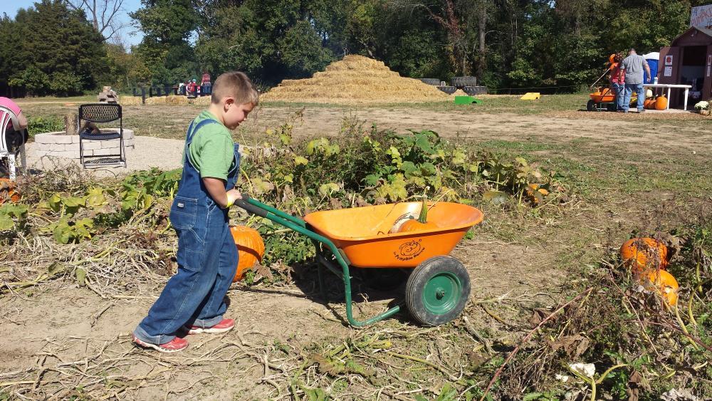 Pumpkin Barrow at Greendell Landscape Solutions