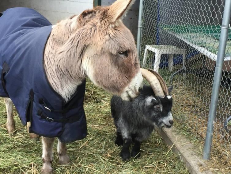 Arion Farm Donkey & Sheep