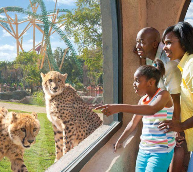 Charming Busch Gardens Tampa Cheetah Hunt