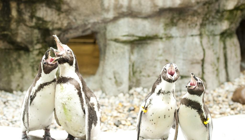 Penguins at the Columbus Zoo