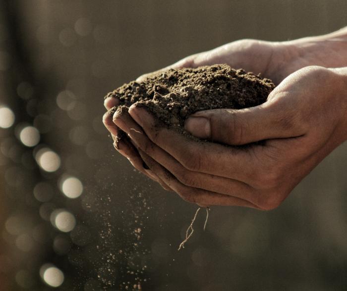 Plant it Forward - earth