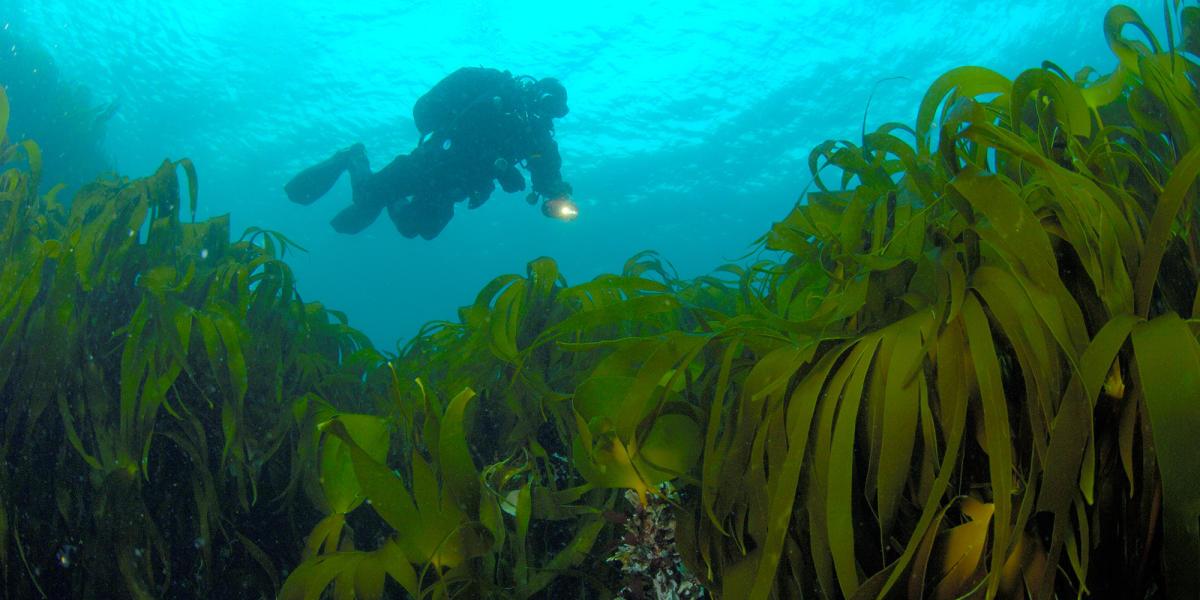 Dykking i Farsund