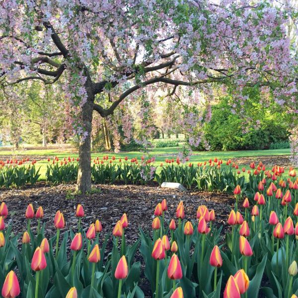 Foster Park in the Spring - Fort Wayne