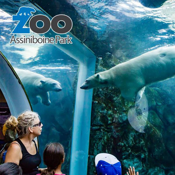 Journey to Churchill at the Assiniboine Park Zoo