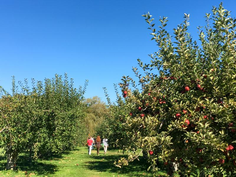 Rocky Brook Orchards