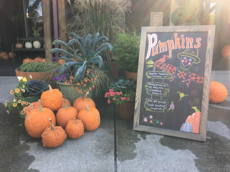 oliver pumpkins