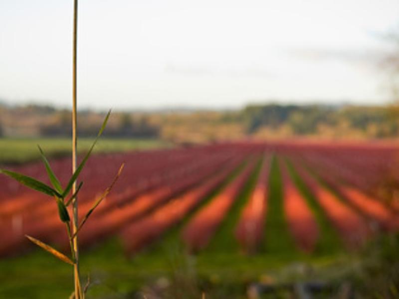 Winery Mist Image
