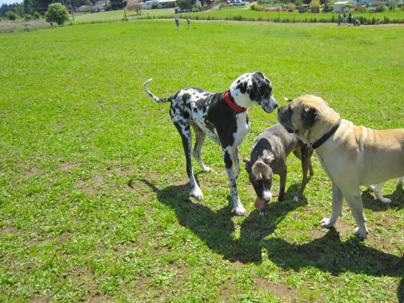 brush prairie dog park