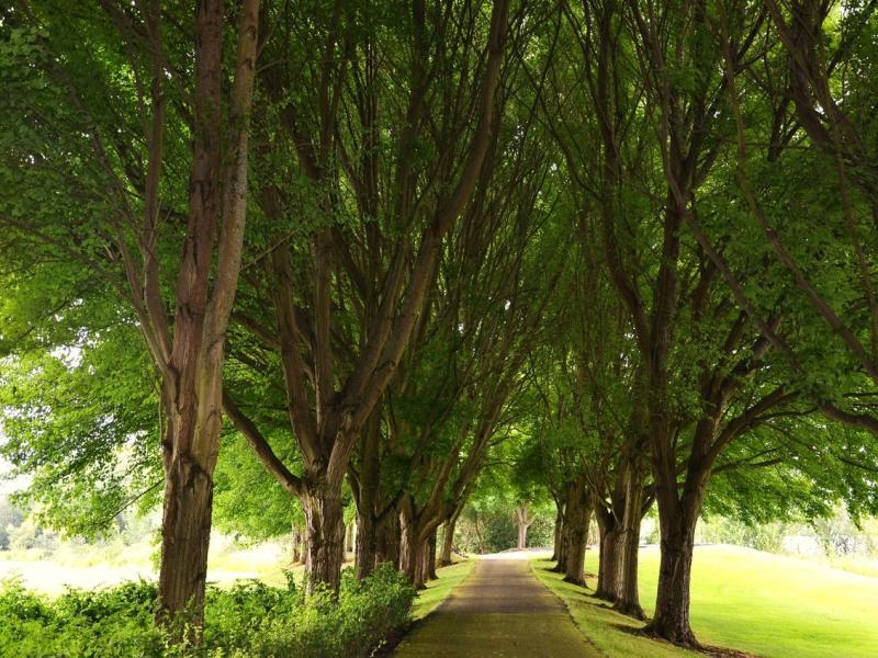 Frenchman's Trail