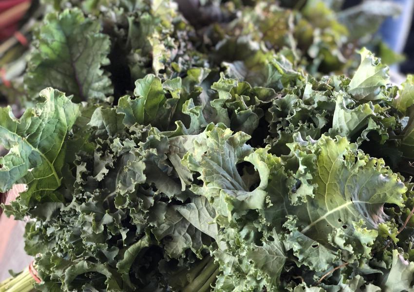 canandaigua-farmers-market-kale