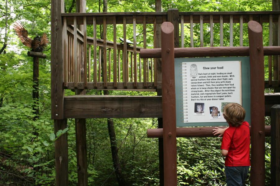 Woodland Trail Kid's Adventure