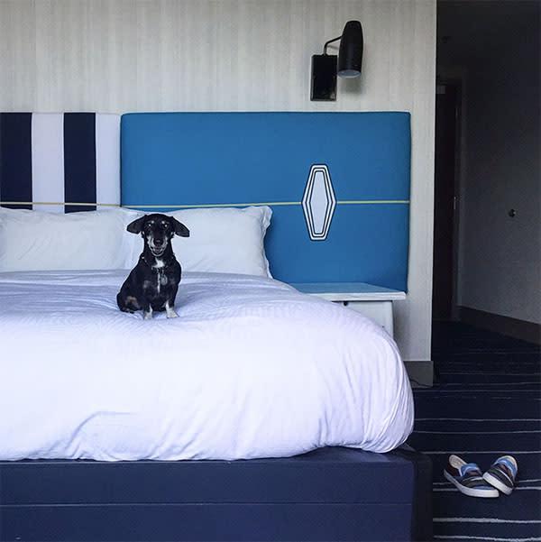 Dog on bed at Kimpton Shorebreak Hotel