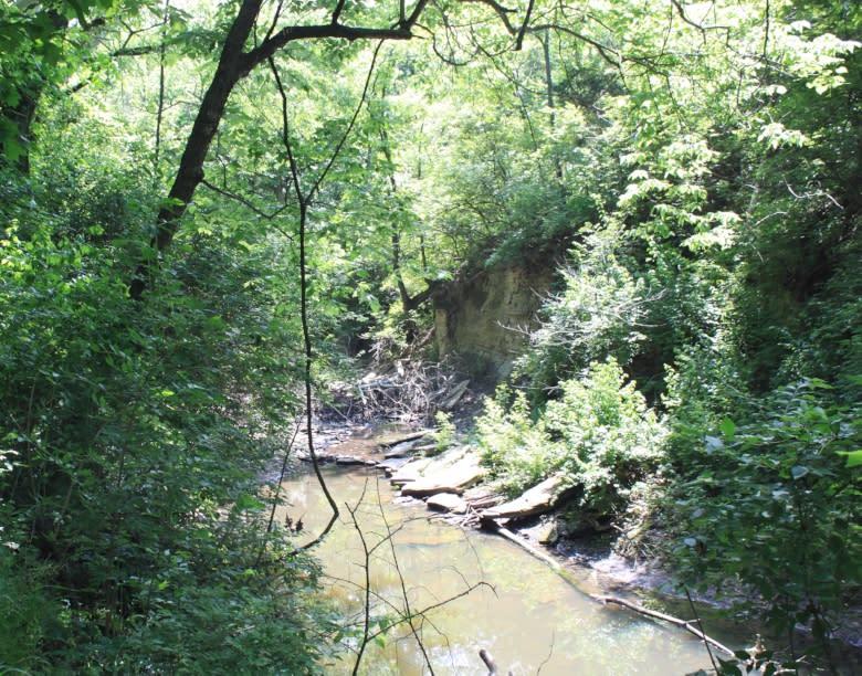 Dornwood Trails 4