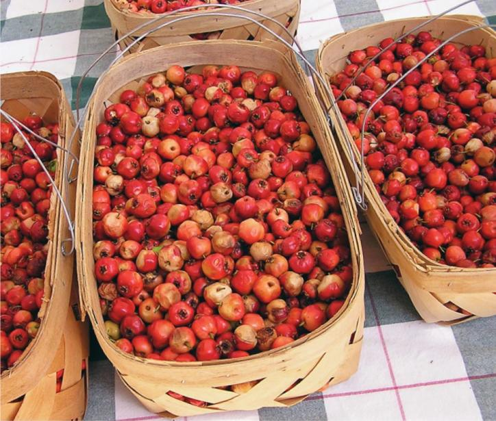 These sweet, red berries make an excellent jelly. Taste all you want at the Starks Mayhaw Festival!