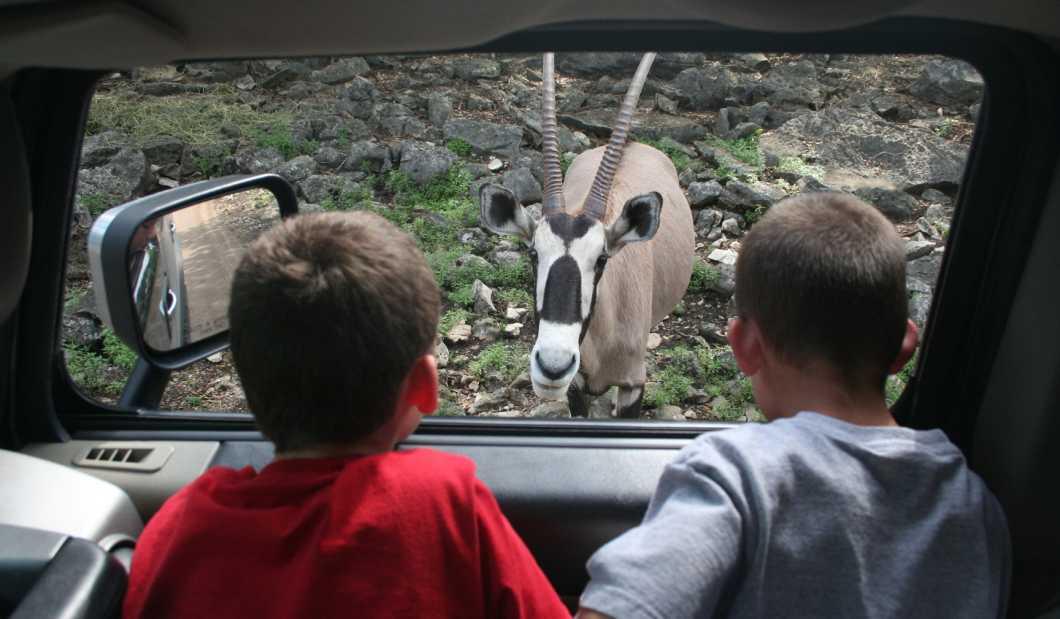Natural Bridge Wildlife Ranch.JPG