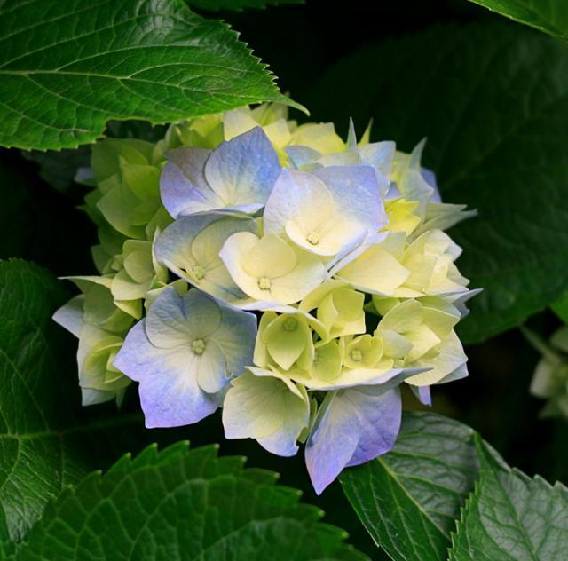 Annie V Florist