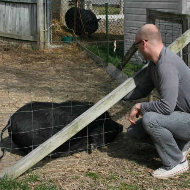 Wilbur & Bella the pigs