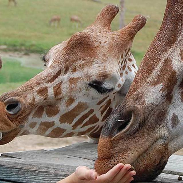 NEW Metro Richmond Zoo