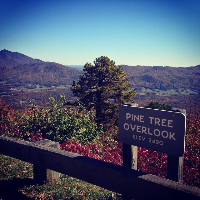 Pine Tree Overlook - Fall Photo