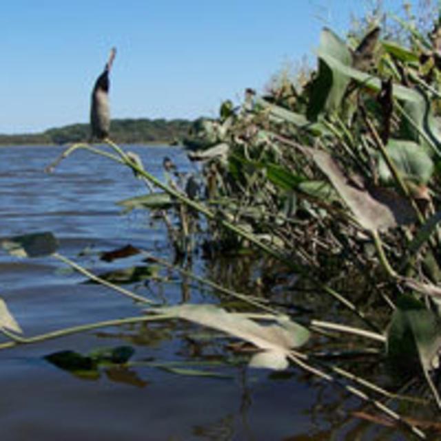 NEW App River Canoe Launch