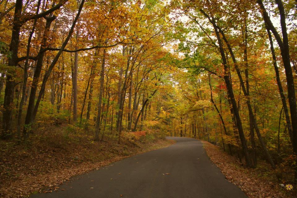 Desoto State Park Foliage