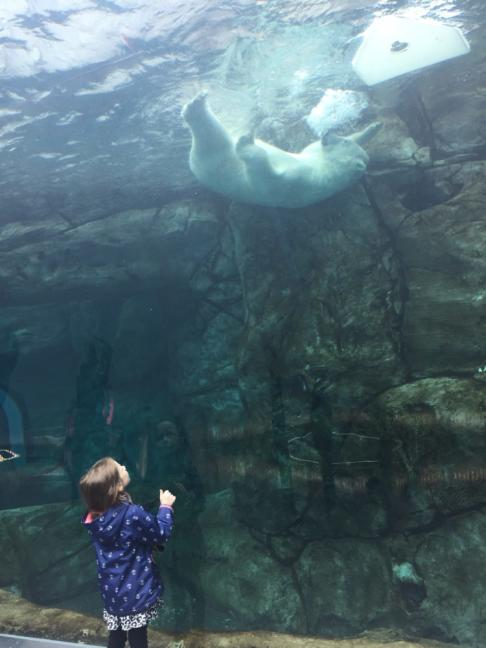 Child watched a polar bear swimming above.