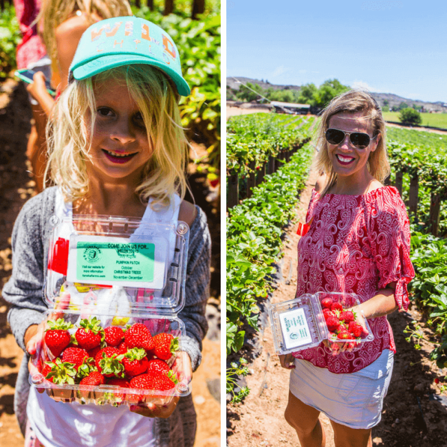 Tanaka Farms Strawberry Tour in Irvine. One of the best things to do in Orange County with kids