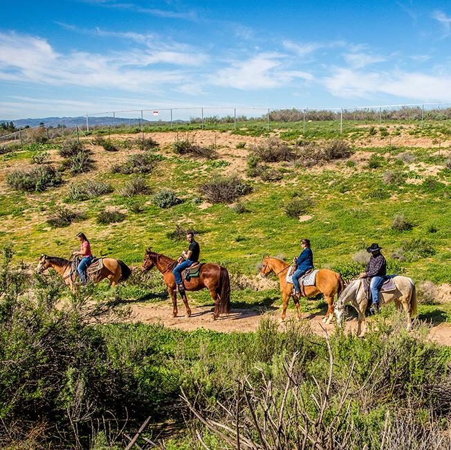 Horseback Riding in Temecula Wine Country