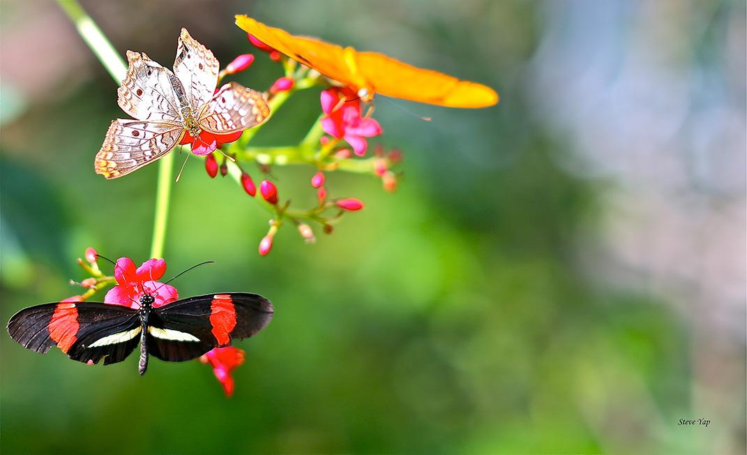 butterfly wonderland - memorial day - body
