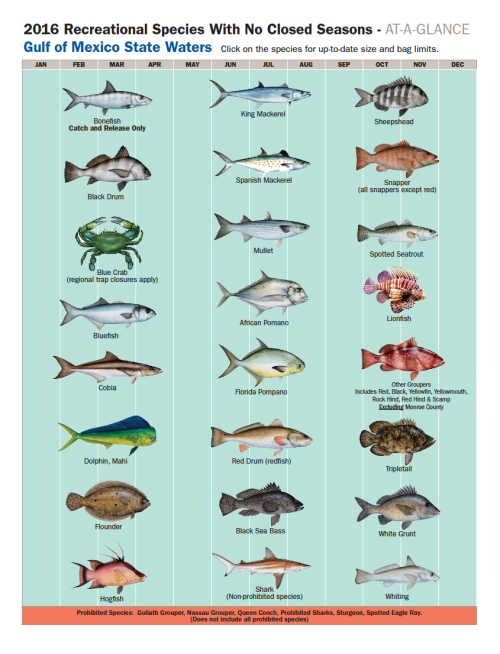 Panama City Beach Florida Recreational Fishing Species with no Closed Seasons